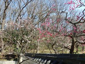 三ツ池公園 BS-house0003.jpg